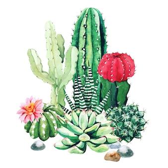 수채화 선인장 식물과 다육 식물의 구성