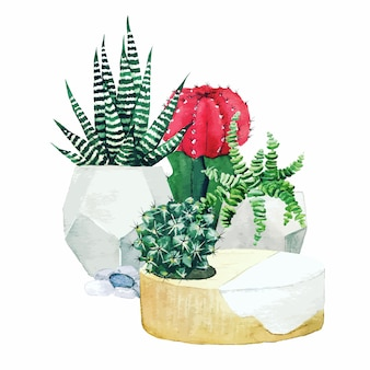 Composition of potted cactus plants and succulents