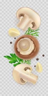 Composition of  realistic champignon mushroom isolated
