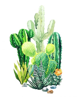 Composition of watercolor cactus plants and succulents