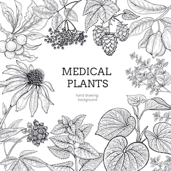 Composition with medical herbs and place for inscription. vintage style engraving. hand drawing. white and black graphics.  illustration for  texts and posters of alternative medicine.