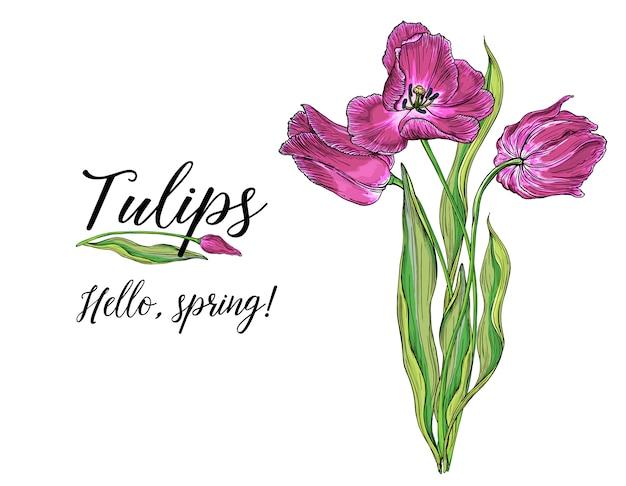 Композиции из векторных цветных тюльпанов, весенние цветы