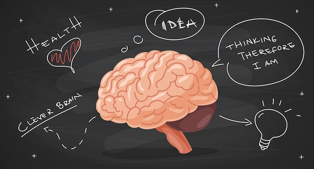 Concept of brain anatomy and creativity