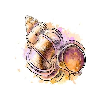 水彩のスプラッシュからホラ貝シェル、手描きのスケッチ。塗料のベクトルイラスト