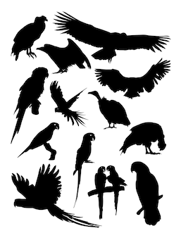 Condor and parrot silhouette