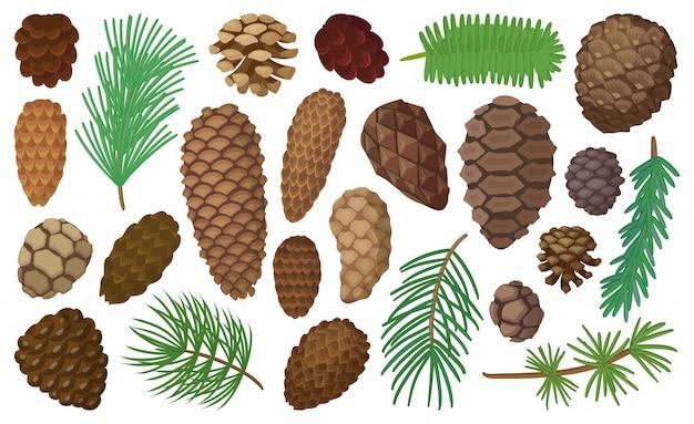 Cone pine isolated cartoon set icon. illustration spruce pinecone on white background. cartoon set icon cone pine.