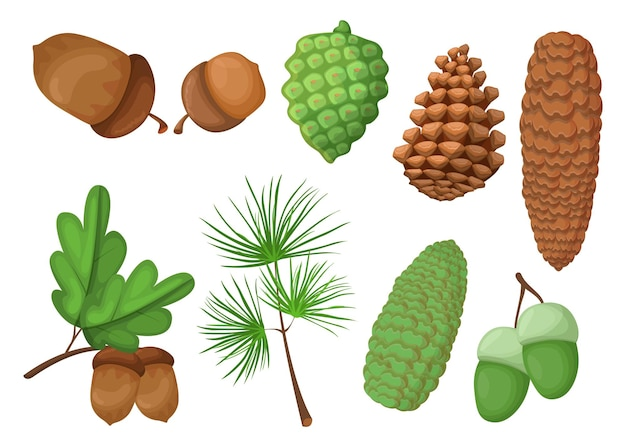 Cones and acorns set