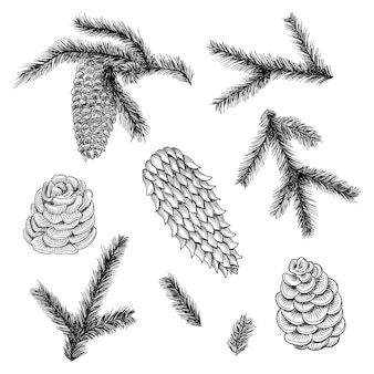 Cones set and pine and spruce tree branches.