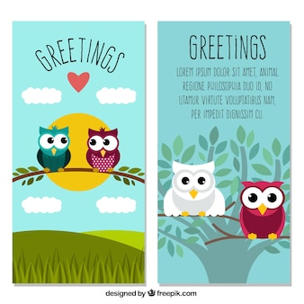 Congratulations with beautiful owls