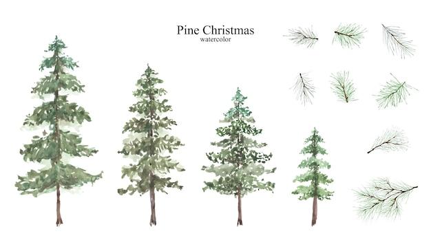 Набор акварели хвойных и сосновых ветвей для украшения зимних рождественских фестивалей, изолированных на белом фоне.