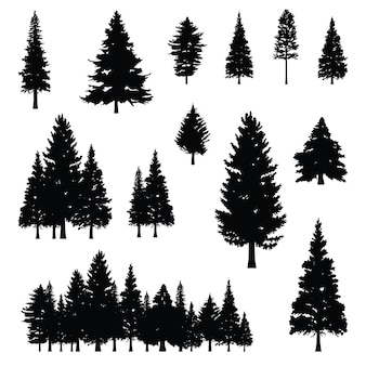 Coniferous pine fir conifer tree forest silhouette