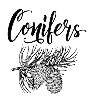Conifers christmas card or invitation design vector sketch with a pattern of conifers lettering