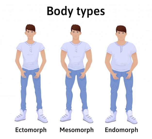 인체의 구성. 남자 체형. endomorph, ectomorph 및 mesomorph. 티셔츠와 청바지에 젊은 남자. 그림, 흰색 배경에 고립입니다.