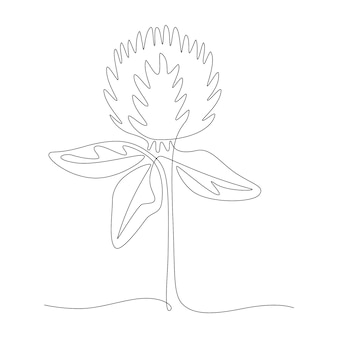 Continuous one line drawing of red clover, vector meadow trifolium pratense. doodle style black and white illustration