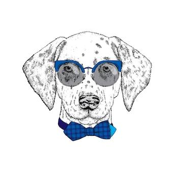 スタイリッシュな服を着たクールな流行に敏感な犬。