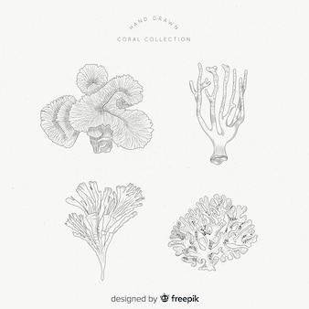 Coral collectio