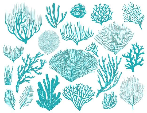 サンゴ礁や海藻の水中植物。
