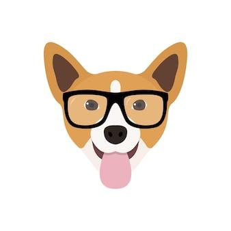Corgi dog in fashions glasses