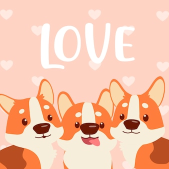 Corgi love you