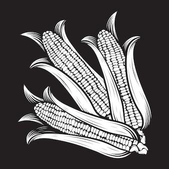 トウモロコシの穂軸のイラスト。