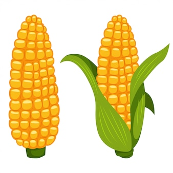 Corn cobs vector cartoon flat vegetable icon isolated on white background.