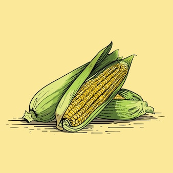 Corn hand drawn illustration of corn with engraving style