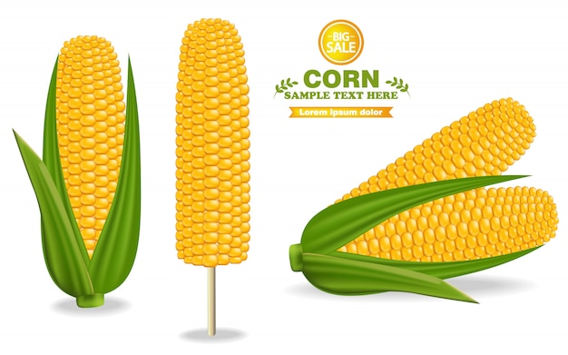 Corn harvest detailed illustration