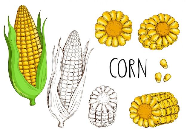Кукуруза, изолированные на белом фоне