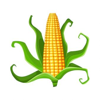 コーン。孤立した熟したトウモロコシの耳。緑の葉と黄色のトウモロコシの穂軸。夏のファームデザイン要素。トウモロコシの甘い束