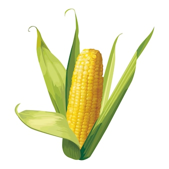 Corn vector design illustration template