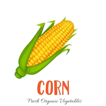 Corn vegetable