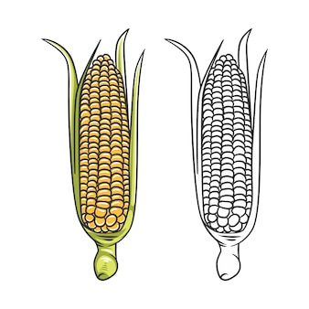 Corncobs with yellow corns and green leaves