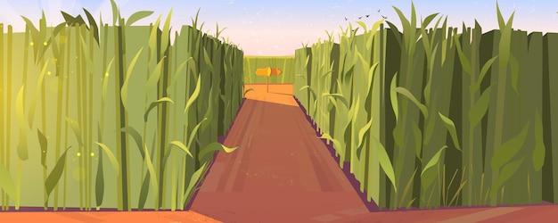 나무 도로 포인터와 높은 녹색 식물이 있는 옥수수 밭 낮 풍경