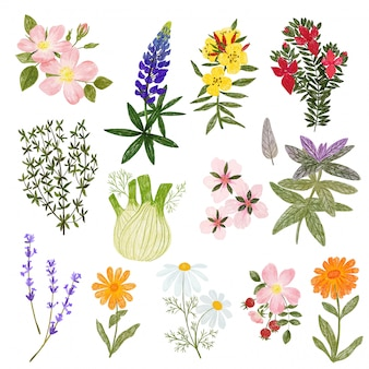 Cosmetic plants, pencils hand drawn cute style