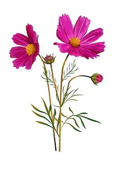 코스모스 꽃 핑크 색상 절연