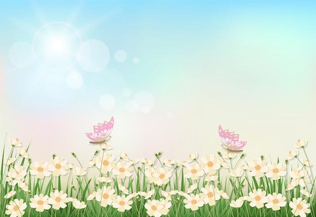 Cosmos flowers spring season