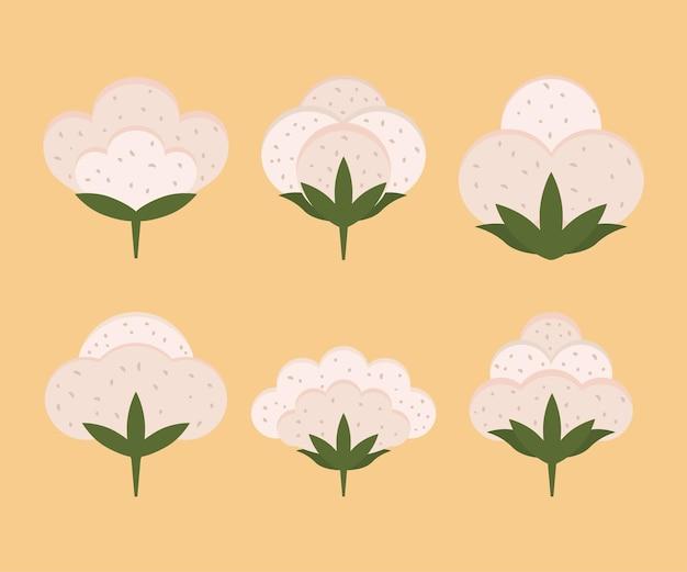 Cotton boll organics