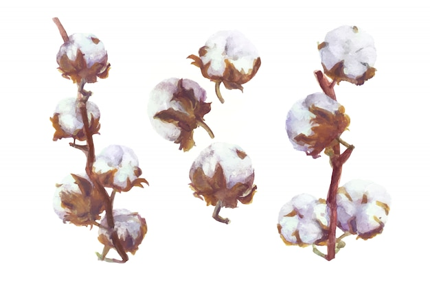 Cotton bolls  watercolor branch and wreath painting. handdrawn botanical set