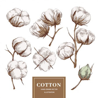 Cotton branch collection