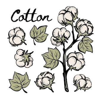 Cotton colorful botany sketch with branch boll and leaves of plant in vintage style hand drawn  illustration set