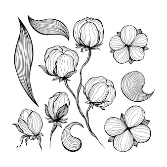 Cotton flowers abstract line art contour drawings.