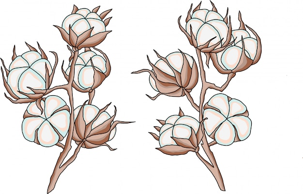 Cotton flowers branches vector illustration