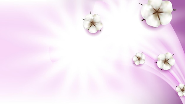Cotton flowers natural buds copy space vector. decorative nature cotton blossom flowers and light rays. delicate softness herbal plant for textile production template realistic 3d illustration