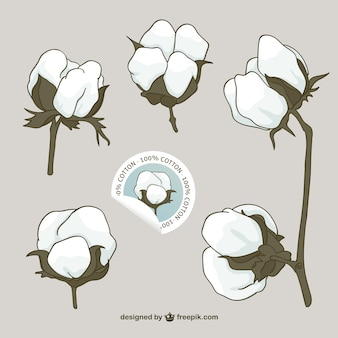 Cotton flowers vector