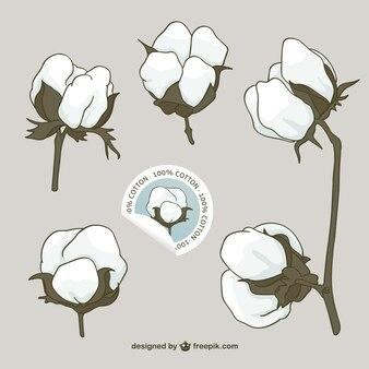 Cotton flowers vector