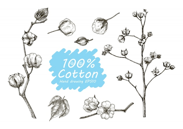 Cotton set hand drawing