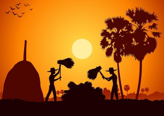 Сельская жизнь в азии человек собирает рис, ударив рисовый сноп во время восхода солнца, силуэт
