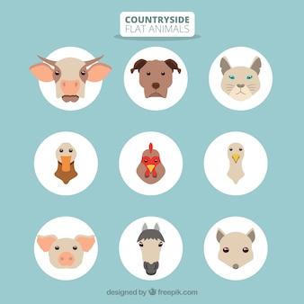 Countryside animals