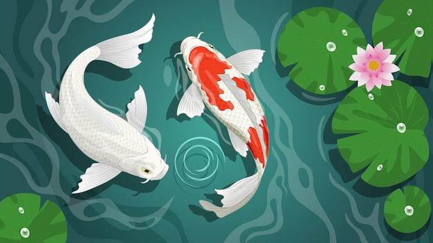 Couple of beautiful koi in the pond