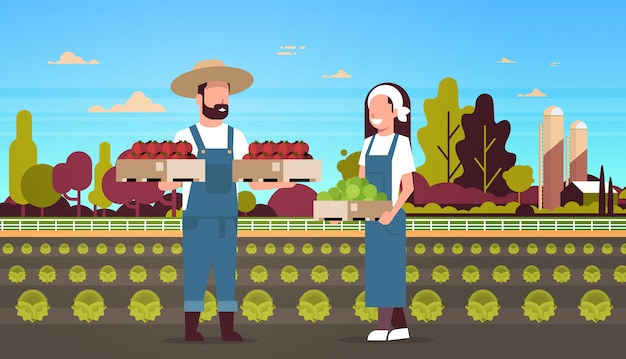 Couple farmers holding boxes red and green tomatoes man woman harvesting vegetables agricultural workers eco farming concept farmland field countryside landscape full length horizontal